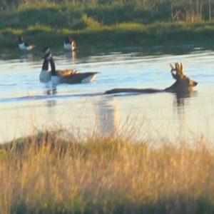 Swimming the creek