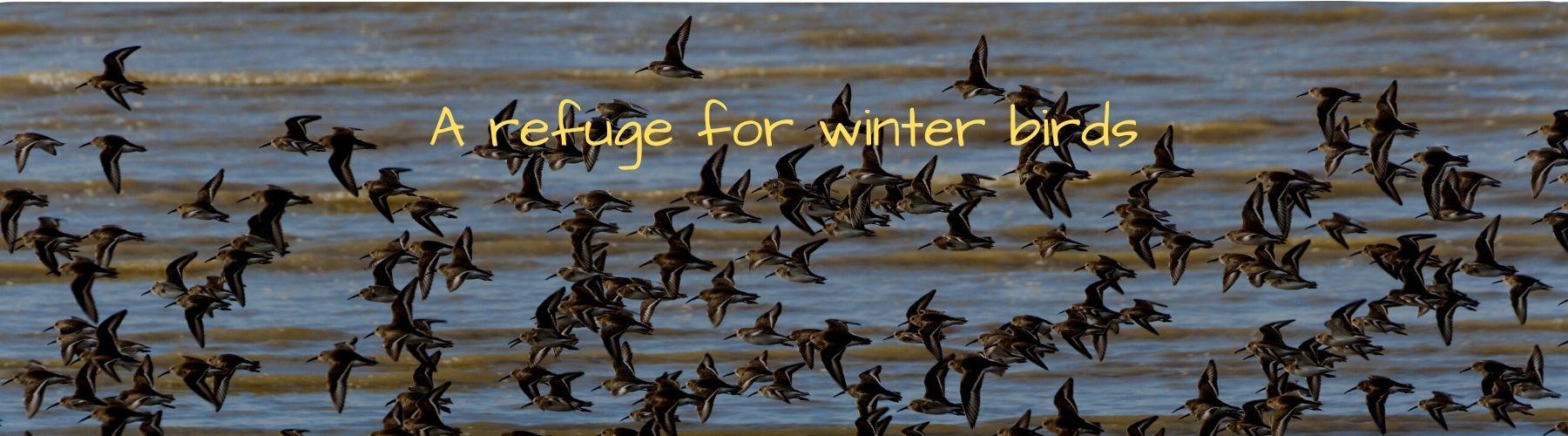 header salt marsh winter